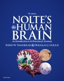 cover image - Nolte's The Human Brain Elsevier eBook on VitalSource,7th Edition