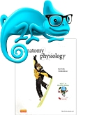 cover image - Elsevier Adaptive Learning for Anatomy and Physiology,8th Edition