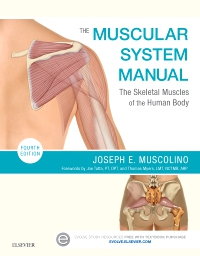 cover image - The Muscular System Manual,4th Edition