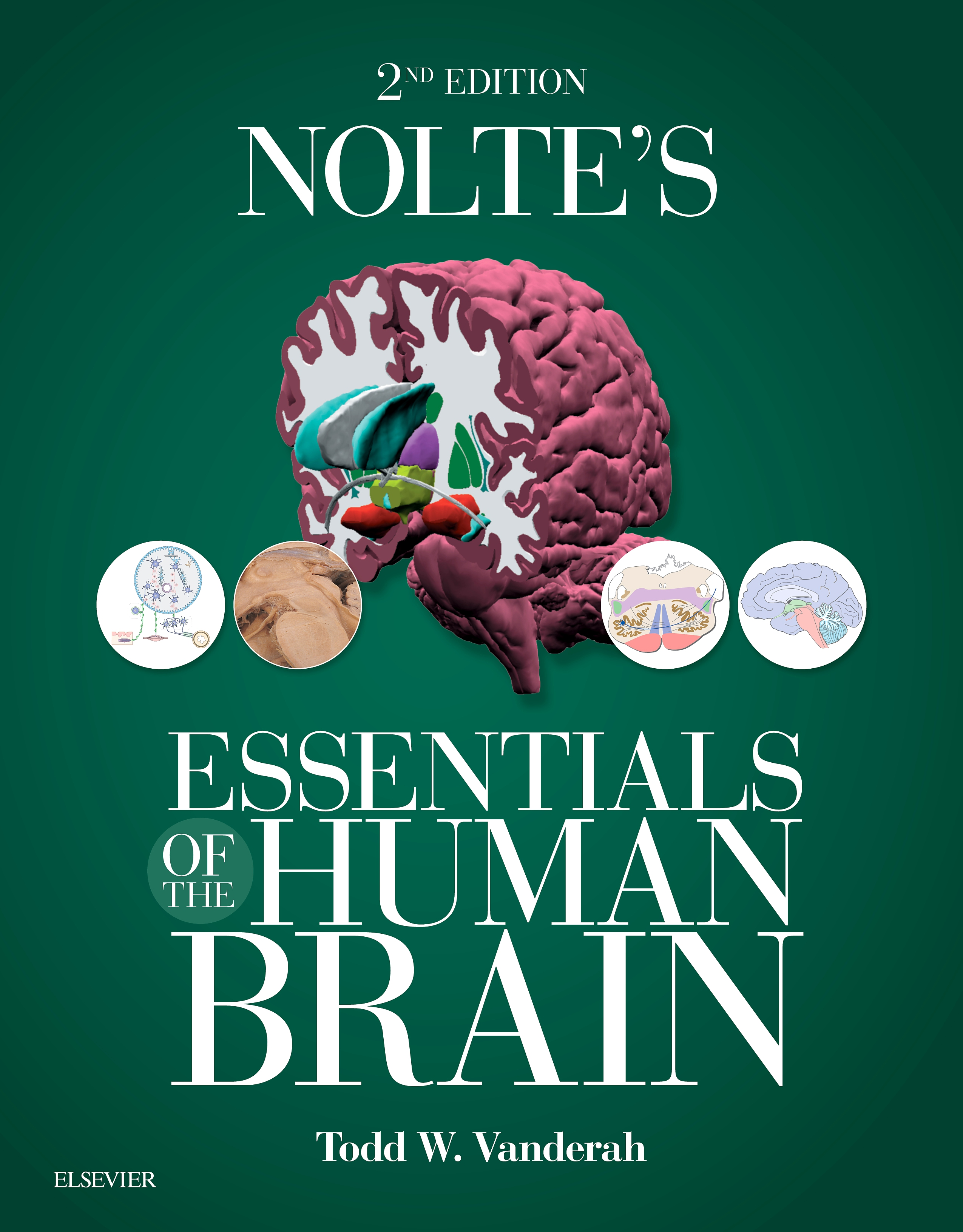 Evolve Resources for Nolte's Essentials of the Human Brain, 2nd Edition