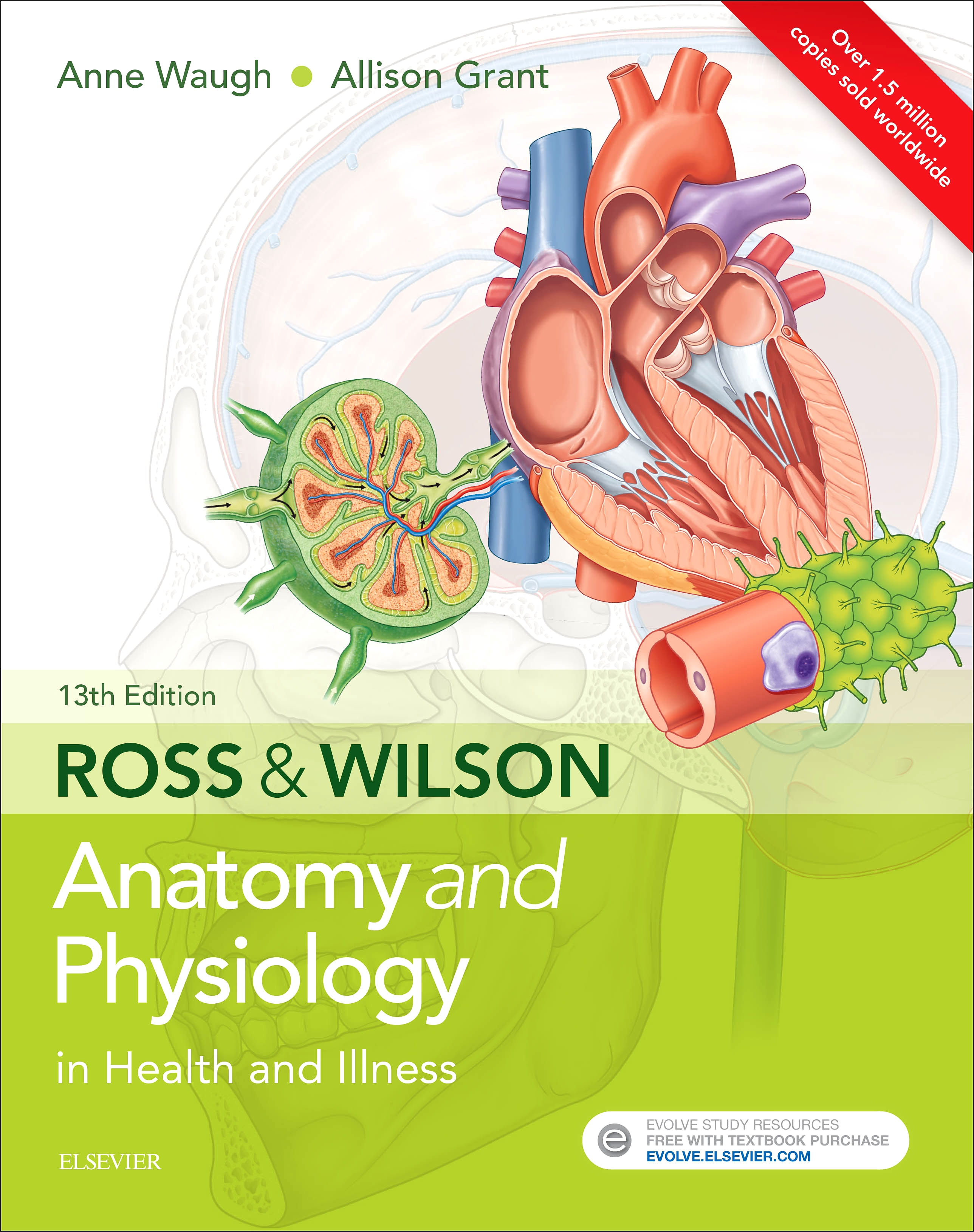 Ross & Wilson Anatomy and Physiology in Health and Illness Elsevier eBook on VitalSource, 13th Edition